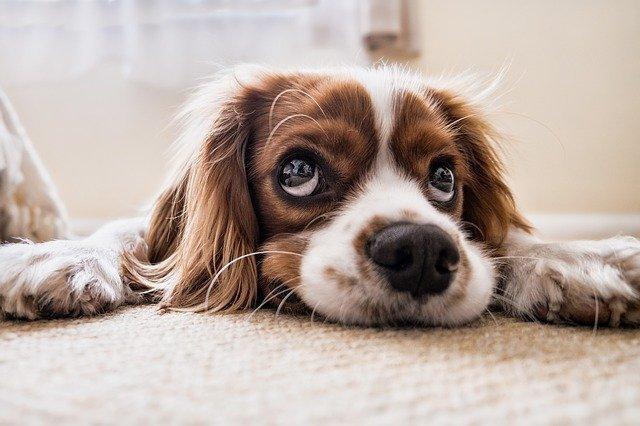 perro arrepentido